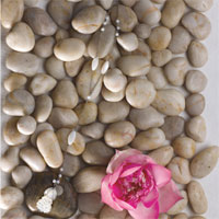 Tinh khiết và thanh lịch với Zen