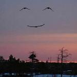 Phi thường - kỳ quặc - Hình ảnh khổng lồ khó tin trên bầu trời