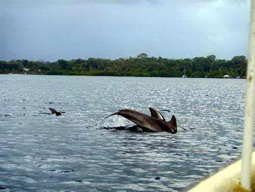 Bocas del Toro: thiên đường ở Panama - 3