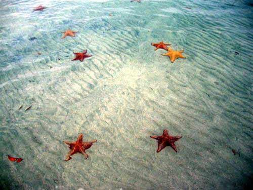 Bocas del Toro: thiên đường ở Panama - 4