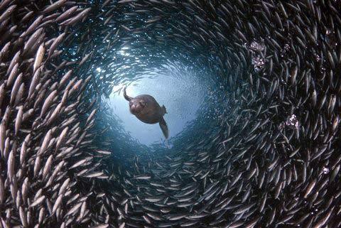 Những hình ảnh tuyệt đẹp dưới đáy đại dương - 1
