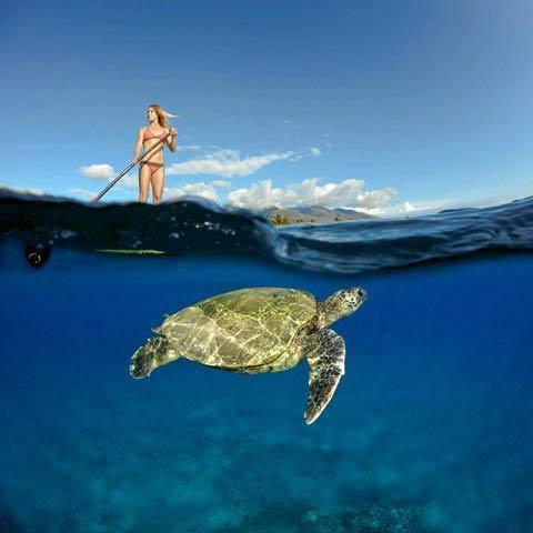 Những hình ảnh tuyệt đẹp dưới đáy đại dương - 2