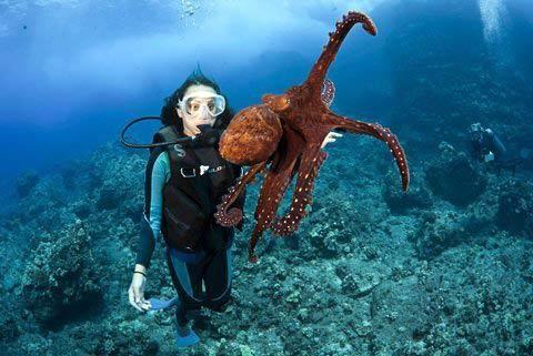 Những hình ảnh tuyệt đẹp dưới đáy đại dương - 4