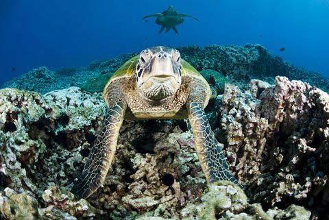 Những hình ảnh tuyệt đẹp dưới đáy đại dương - 7