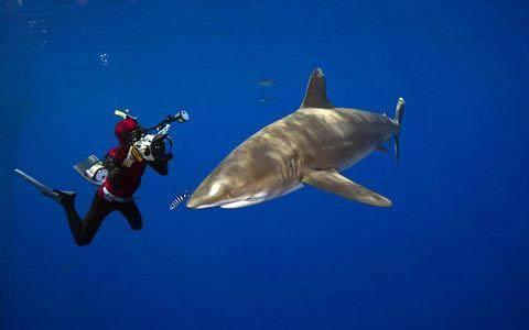 Những hình ảnh tuyệt đẹp dưới đáy đại dương - 11