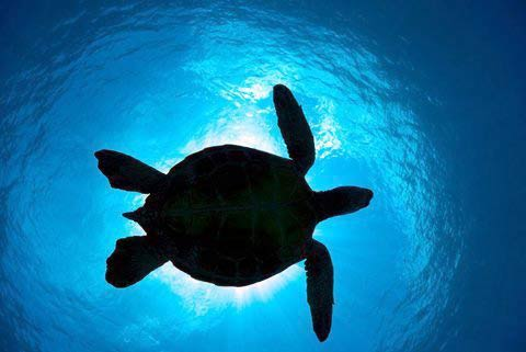 Những hình ảnh tuyệt đẹp dưới đáy đại dương - 12