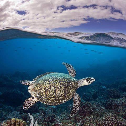 Những hình ảnh tuyệt đẹp dưới đáy đại dương - 13