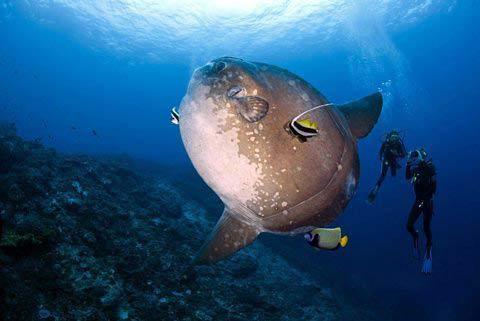 Những hình ảnh tuyệt đẹp dưới đáy đại dương - 8