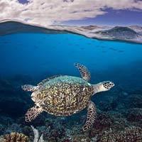 Những hình ảnh tuyệt đẹp dưới đáy đại dương