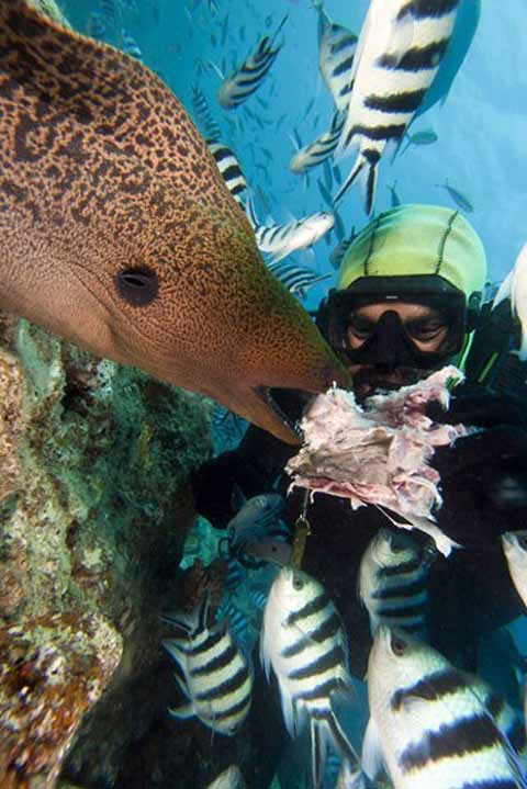 Những hình ảnh tuyệt đẹp dưới đáy đại dương - 5