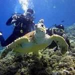 Du lịch - Bocas del Toro: thiên đường ở Panama