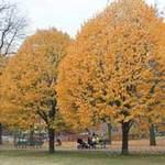 Du lịch - Boston ngập trong sắc vàng ngày cuối thu