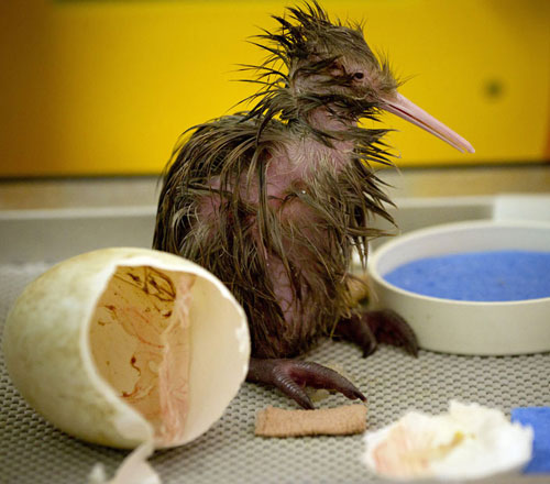 Ảnh đẹp: Đại bàng không chiến với quạ đen - 4