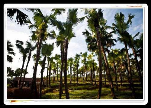 Khám phá nét đẹp làng quê ở Phú Thọ - 3