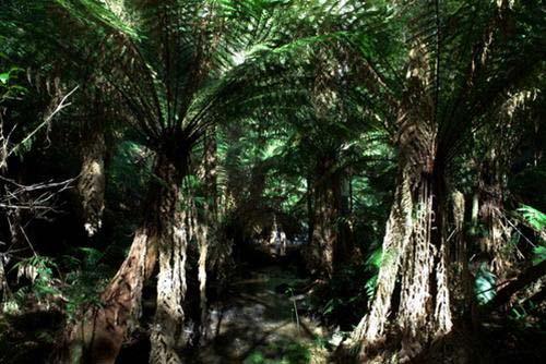 Giữa thiên nhiên hoang dã châu Úc - 4