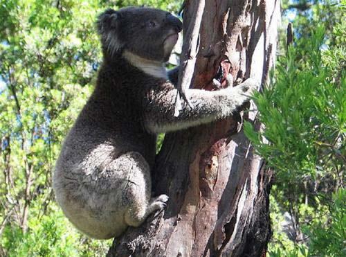 Giữa thiên nhiên hoang dã châu Úc - 5