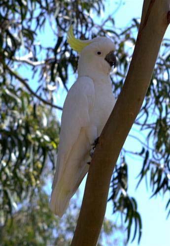 Giữa thiên nhiên hoang dã châu Úc - 7