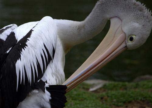 Giữa thiên nhiên hoang dã châu Úc - 9