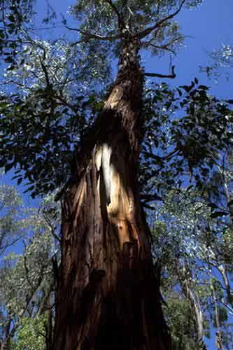 Giữa thiên nhiên hoang dã châu Úc - 2