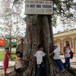 Tin tức trong ngày - 4 cây di sản kỳ lạ ở một trường học
