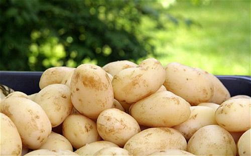 Thực phẩm dễ gây ngộ độc khi ăn cả vỏ - 1