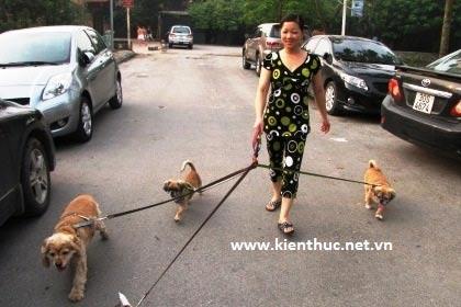 HN: Dắt chó đi dạo, lương 6 triệu/tháng - 2