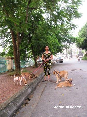 HN: Dắt chó đi dạo, lương 6 triệu/tháng - 1