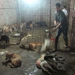"""Tin tức trong ngày - Trộm chó liên tỉnh: Đêm ở lò """"hóa kiếp"""""""