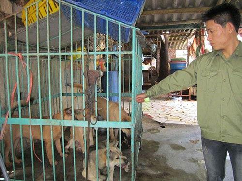 Món cầy tơ và nghề buôn chó liên tỉnh - 2