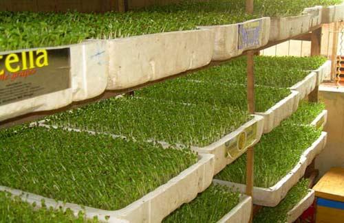 Nhiều mẫu nông, thủy sản nhiễm hóa chất - 2