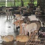 Tin tức trong ngày - Món cầy tơ và nghề buôn chó liên tỉnh