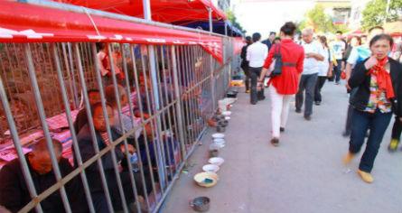 Trung Quốc: Gom ăn mày vào lồng sắt - 1