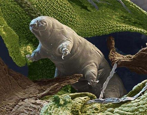 Phát hiện sinh vật sống được ở vũ trụ - 1