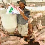 Thị trường - Tiêu dùng - Thức ăn chăn nuôi vào đợt tăng giá mới