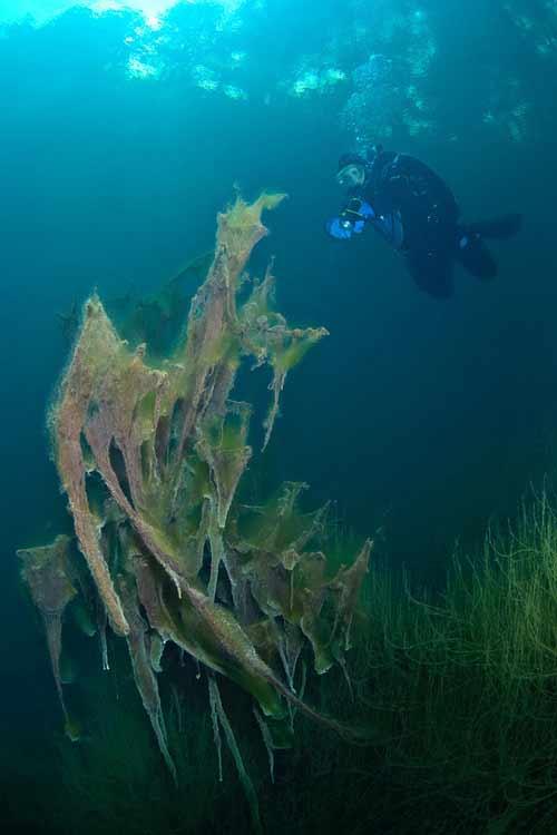 Bí ẩn dưới đáy hồ nước xanh ngắt kì ảo - 2