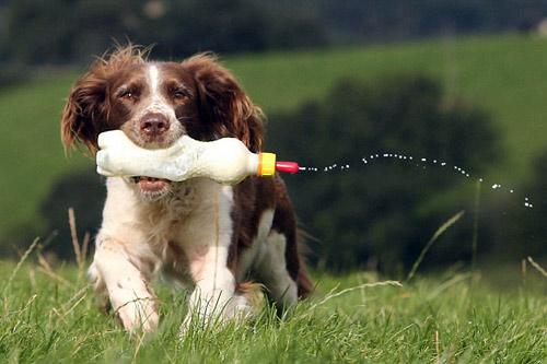 Chó làm bảo mẫu cho cừu - 7