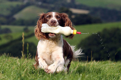 Chó làm bảo mẫu cho cừu - 6