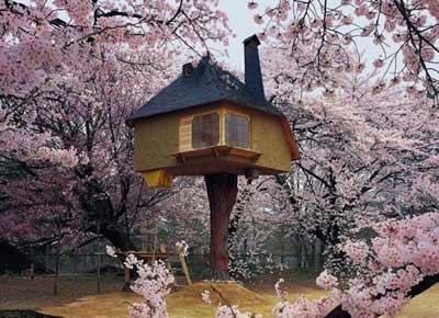 Chiêm ngưỡng nhà trên cây đẹp như trong cổ tích - 1