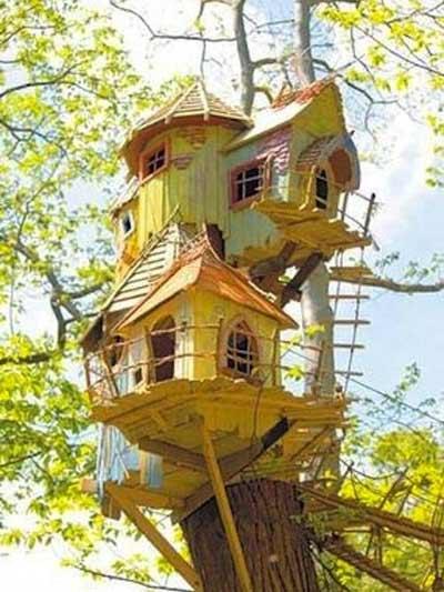 Chiêm ngưỡng nhà trên cây đẹp như trong cổ tích - 4