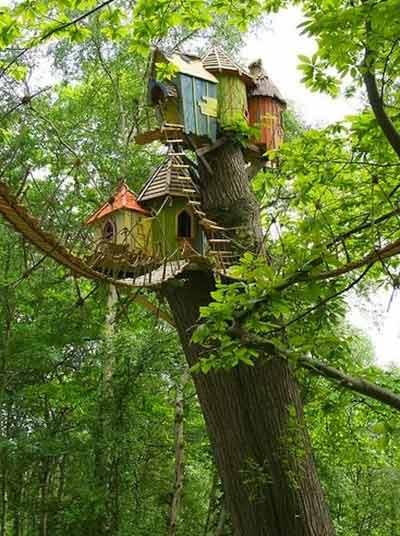 Chiêm ngưỡng nhà trên cây đẹp như trong cổ tích - 5