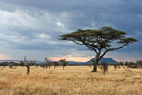 Thám hiểm những vùng đất hoang vu nhất thế giới - 2