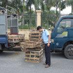 Thị trường - Tiêu dùng - Gà lậu Trung Quốc lại tràn vào Việt Nam