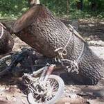 Tin tức trong ngày - Sốc vì lâm tặc tự quay video phá rừng