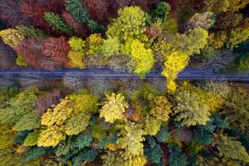 Ngắm rừng mùa thu Ba Lan từ trên cao - 4