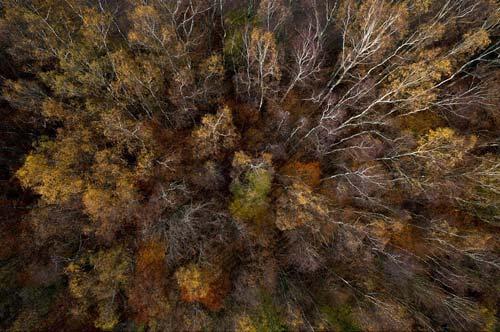 Ngắm rừng mùa thu Ba Lan từ trên cao - 6
