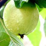 Sức khỏe đời sống - Trái cây mùa hè tốt cho các chàng