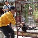 Tin tức trong ngày - Người trong cuộc kể chuyện giải cứu động vật hoang dã