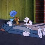 Cười 24H - Video funny TOM & JERRY: Chú chó con