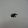Cấp cứu vì bị bọ xít hút máu người cắn?