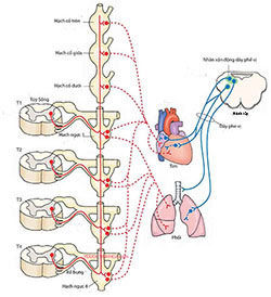 Rối loạn hệ thần kinh thực vật - 1